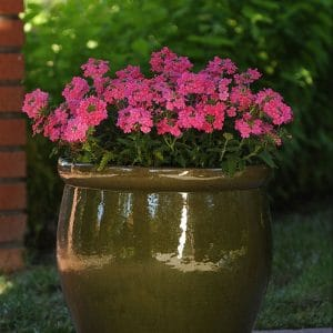 verbena-quartz-pink-xp-container
